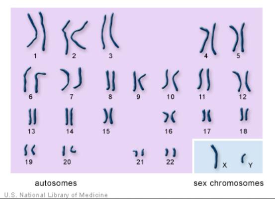 chromo genes